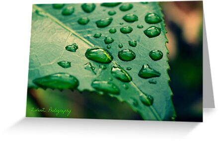 After The Rain by Zoe Harris