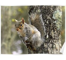 Squirrel On A Short Stick Poster