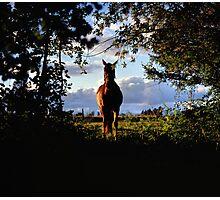 Equine, Evergreen Montana Photographic Print