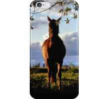 Equine, Evergreen Montana iPhone Case/Skin