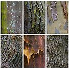 Tree Textures by Ray Fowler