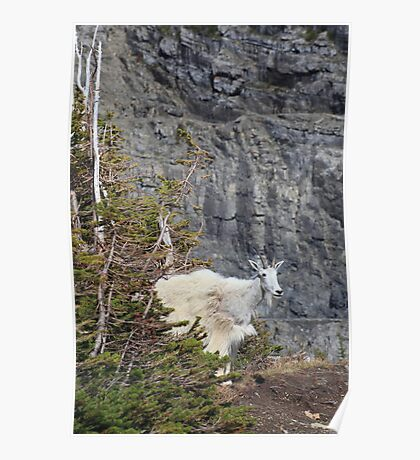 Mountain goat mother Poster