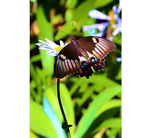 Australian Country Garden Photographic Print
