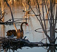 Black Swan - another rare event? by Dean Wiles