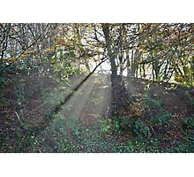 Exmoor: Sunlight through the Trees Photographic Print