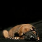 sleeping puppy by vannphotography