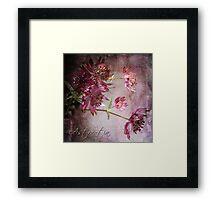 Astrantia Blossoms Framed Print