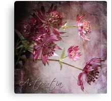 Astrantia Blossoms Canvas Print