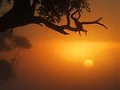 Sunrise through the Mist... by debsphotos