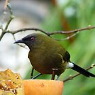 I'm As Sound As A Bell!!! - Bellbird - NZ by AndreaEL