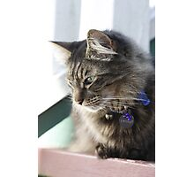 Pretty Kitty :Two Photographic Print