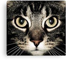 Cat Gaze Canvas Print