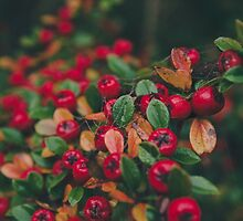 Tiny Winter Berries by Esther Ní Dhonnacha