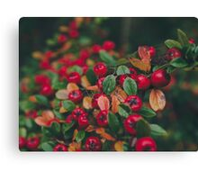 Tiny Winter Berries Canvas Print