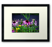 Coneflowers in the garden  Framed Print