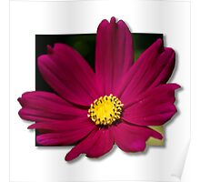 Pop Out Flower Poster