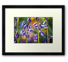 """""""I like this place and could willingly waste my time in it."""" ― William Shakespeare Framed Print"""