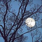 Moon cradeled in the branches by ArielLindus