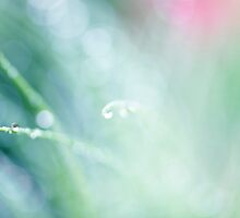 morning dew by Ingz