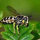 Solitary Wasp Horse Guard by Kathy Baccari