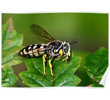 Solitary Wasp Horse Guard Poster