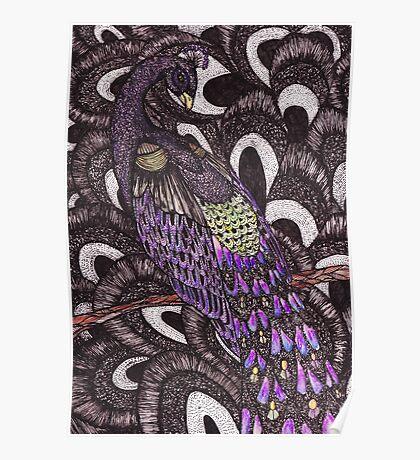 Colour Peacock Poster