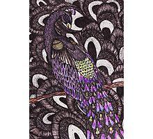 Colour Peacock Photographic Print