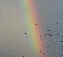Birds and 'Bow by WildestArt