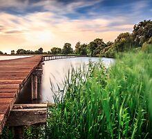 Boardwalk in pond by Zoltán Duray
