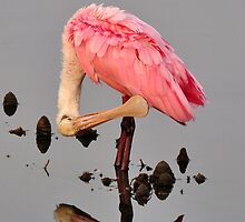 The Preening Spoonbill Reflection by Kathy Baccari