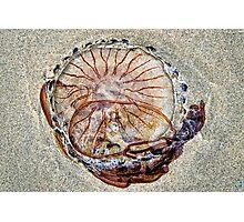 Compass Jellyfish ~ Lyme Regis Photographic Print