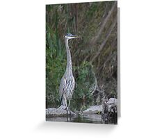Great Blue Heron on the Milwaukee River Greeting Card