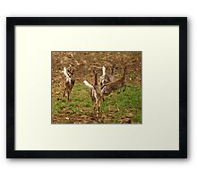 Four Whitetails at Holy Hill Framed Print