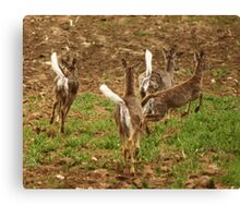 Four Whitetails at Holy Hill Canvas Print
