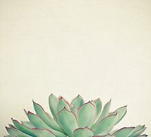 Echeveria by Cassia Beck