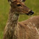 Deer Bust Portrait by Thomas Murphy