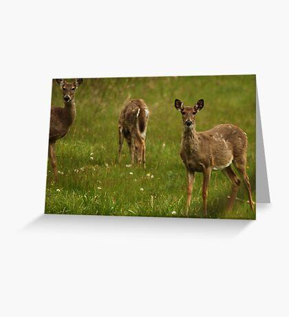 Three Deer Greeting Card