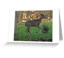 Running White-Tailed Buck Greeting Card