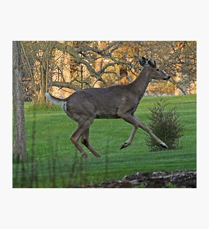Running White-Tailed Buck Photographic Print