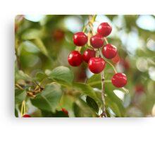 Cherries on the Cherry Tree Metal Print