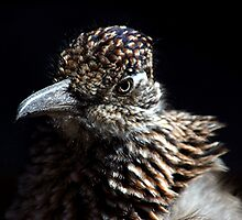 Juvenile Roadrunner by © Loree McComb