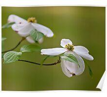Easter Dogwoods Poster