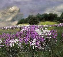 Phlox Storm by Wayne King