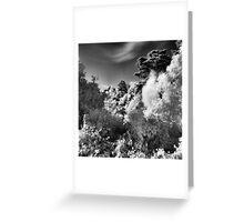 Strybing Arboretum, Golden Gate Park, San Francisco Greeting Card