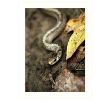 Snake Rattle 'N Roll Art Print