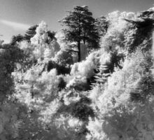 Strybing Arboretum, Golden Gate Park, San Francisco Sticker