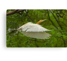 A day with Egrets #1 Canvas Print