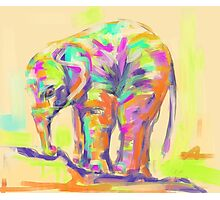 Pillow baby elephant in color Photographic Print