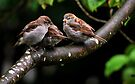 Out of the nest by Jean Poulton