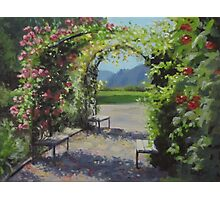 Vineyard Gardens Photographic Print